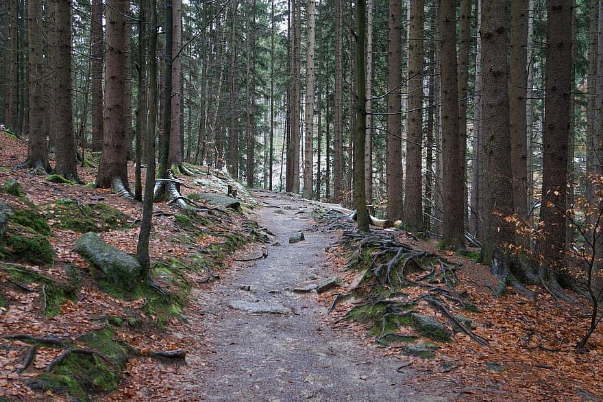 appalachian trail autumn