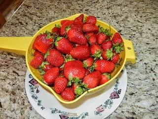 mennonite strawberries